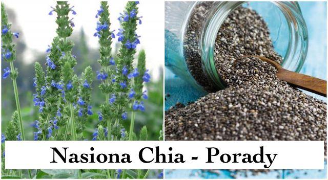 Nasiona Chia – Dodaj tą roślinę do swojego Ogrodu